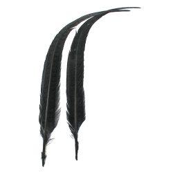 pheasanttail_black